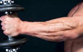 Мышцы предплечья: анатомия, функции и упражнения для дома и зала