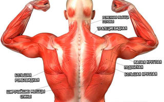 Широкая спина: как сделать спину шире в домашних условиях и тренажерном зале