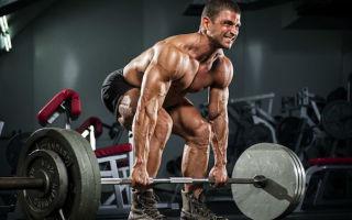 Большая и малая ромбовидные мышцы спины — где находятся и топ 3 упражнения