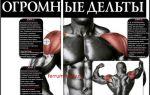 Дельтовидная мышца плеча: где находится, анатомия и функции дельт