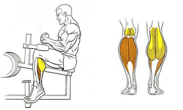 Как нарастить икроножные мышцы подъемами на носки стоя и сидя