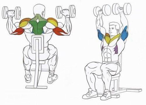 Как сделать плечи шире: рекомендации и упражнения чтобы накачать широкие плечи