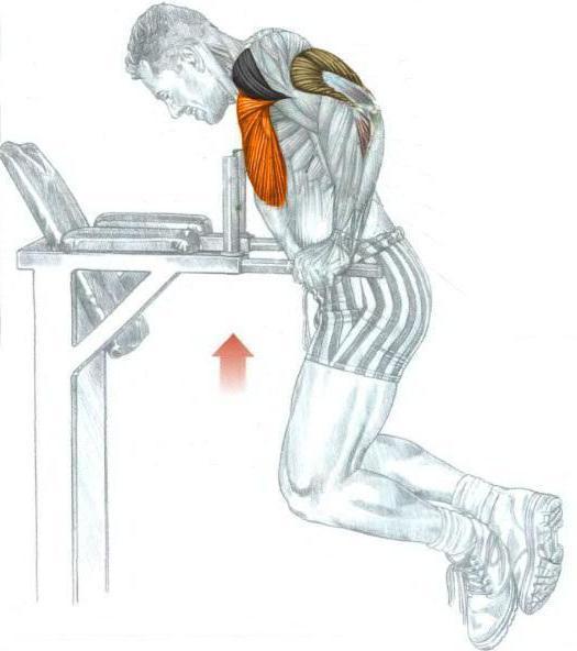 Упражнения на брусьях: какие мышцы работают + программа тренировок