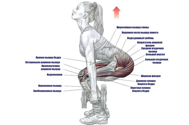 Приседания с гантелями: польза, техника для ягодиц и ног, рекомендации мужчинам и девушкам
