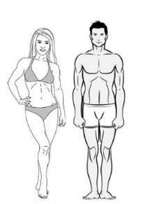 Эндоморф: программа тренировок и особенности питания эктоморфного типа