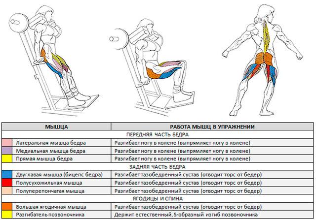 Гакк приседания со штангой: биомеханика движений, принцип выполнения.