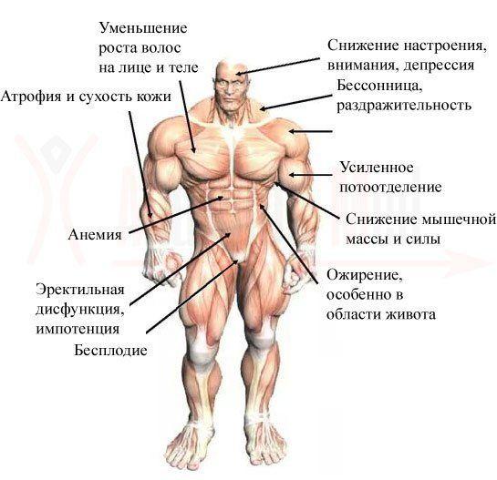 Как повысить тестостерон: топ естественных способов поднять уровень гормона мужчине
