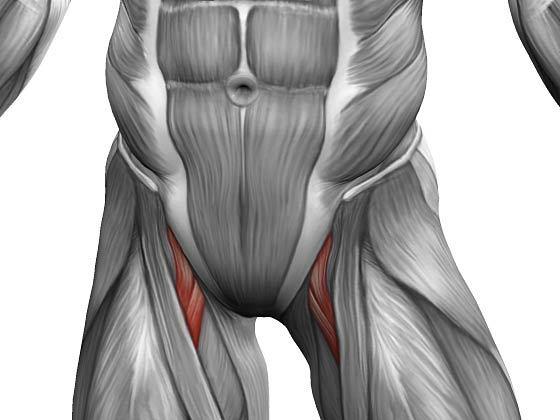 Мышцы ног человека: анатомия, строение, схема-рисунок с названием