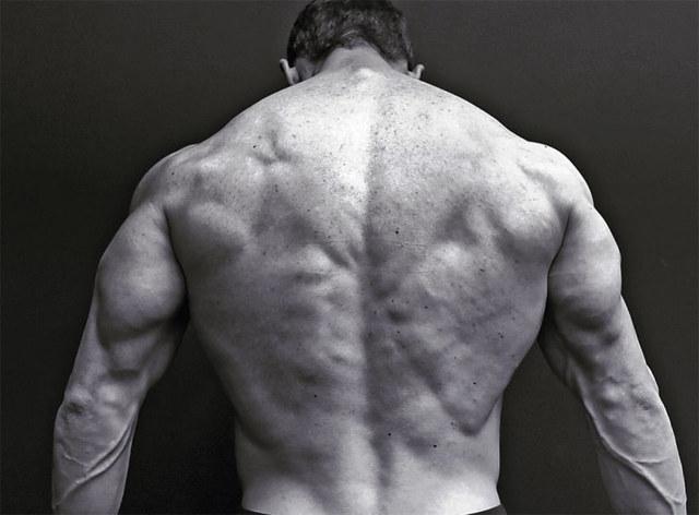 Джефф Сейд (jeff seid): биография, рост, вес, бицепсы атлета