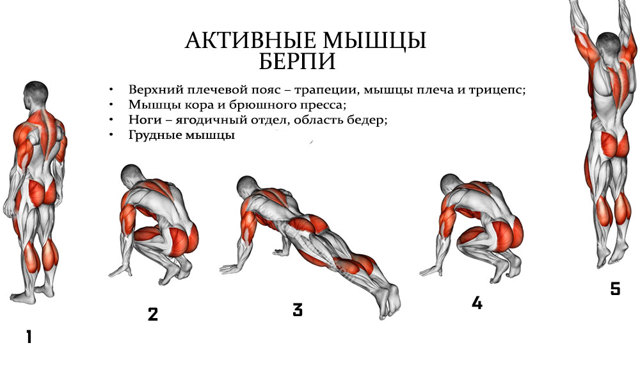Берпи (Бурпи): польза упражнения и техника выполнения для начинающих