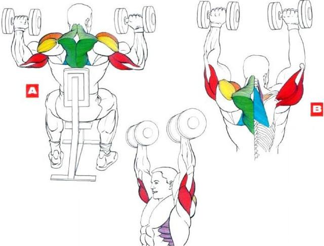Армейский жим штанги с груди стоя и сидя: техника выполнения, какие мышцы работают