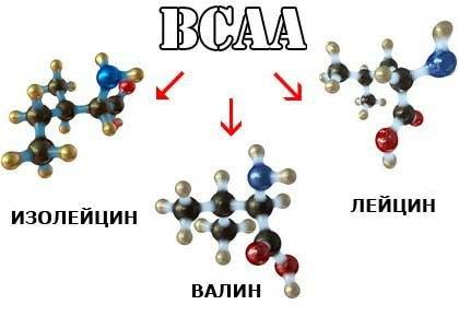 bcaa от optimum nutrition: как принимать, плюсы и минусы