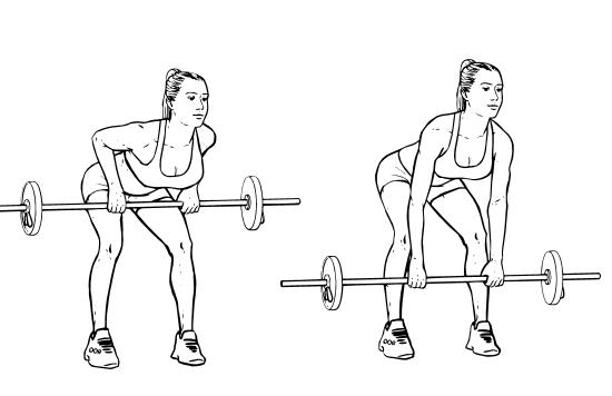 Программа тренировок в тренажерном зале для девушек: лучшие упражнения.