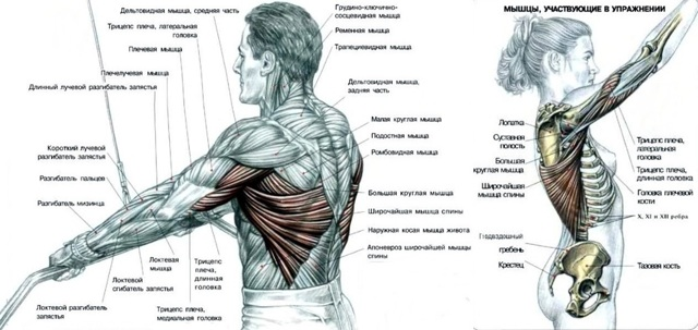 Пуловер в кроссовере: техника выполнения упражнения в блоке для мышц спины