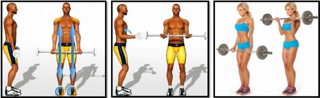 Мифы о тренировках или отжиманий на бицепс не существует