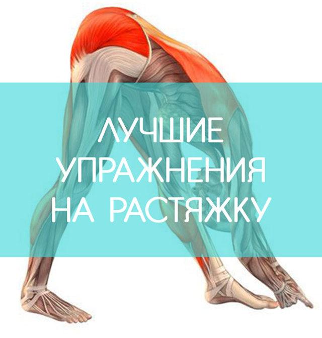 Гибкая спина – как развить с помощью упражнений в домашних условиях