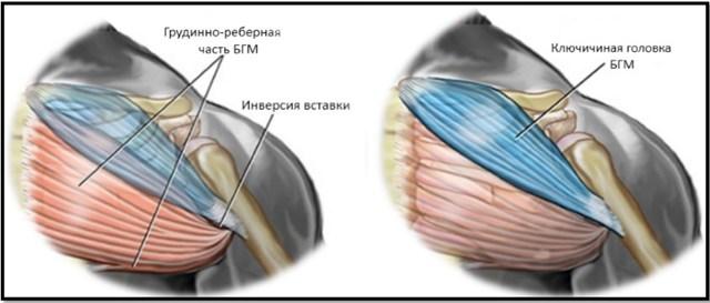 Жим лежа на наклонной скамье: техника со штангой с углом наклона 30 и 40 градусов