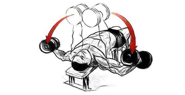 Разводка гантелей лежа на скамье: модификации и техники.