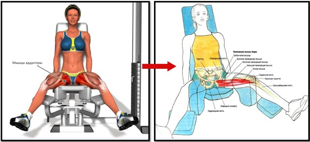 Сведение ног в тренажере: принцип выполнения практики.