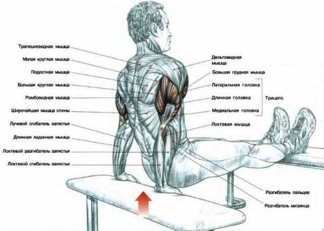 Отжимания от пола для трицепса: тренировка без специального оборудования