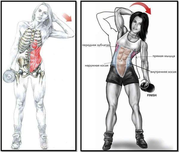 Наклоны в бок с гантелями: как правильно делать упражнение.